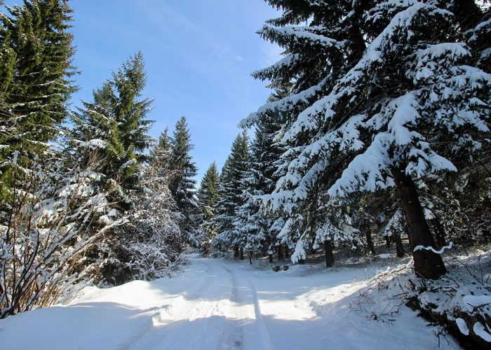 Snowshoeing trails on Trebevic mountain