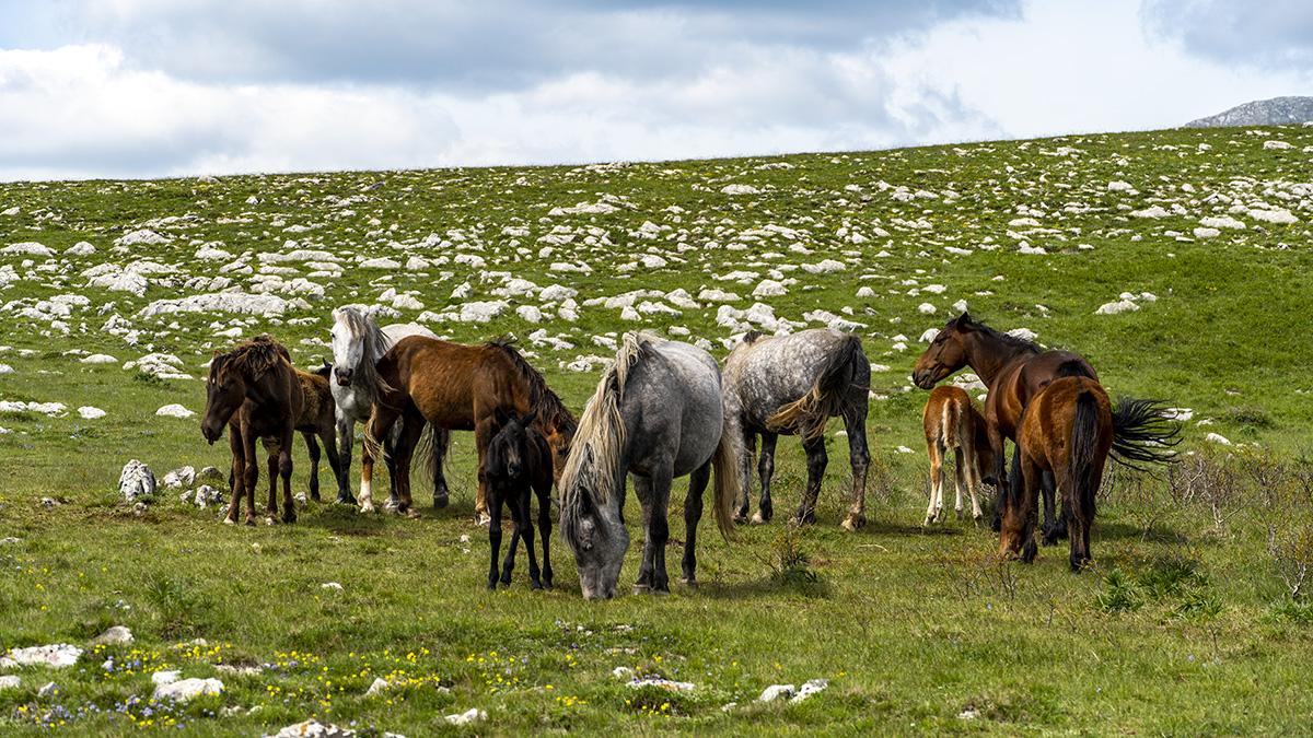 rural and ecco tourism of BiH