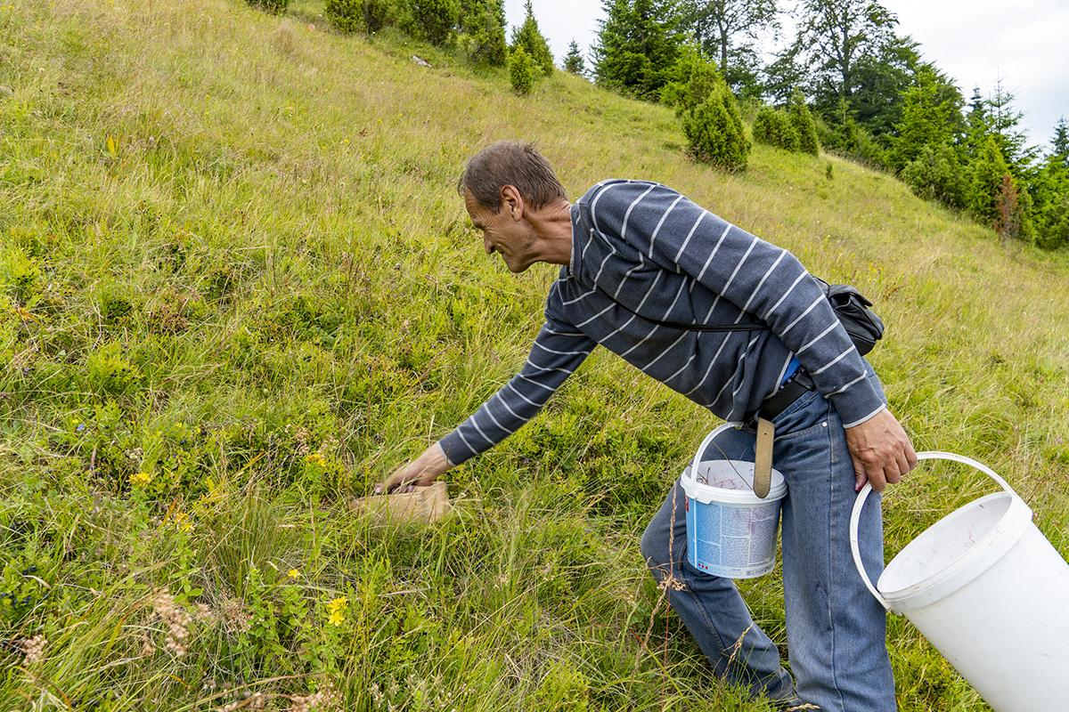 Fruit picking in Bosnia